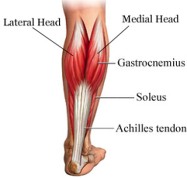 Gastrocnemius/Soleus Strain/Tear - Differential Diagnosis ...